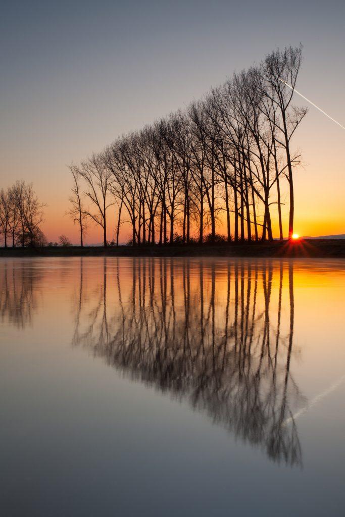 tree reflection - photo dune